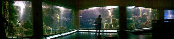 The aquarium finisterrae, a must see with the nautilus room!